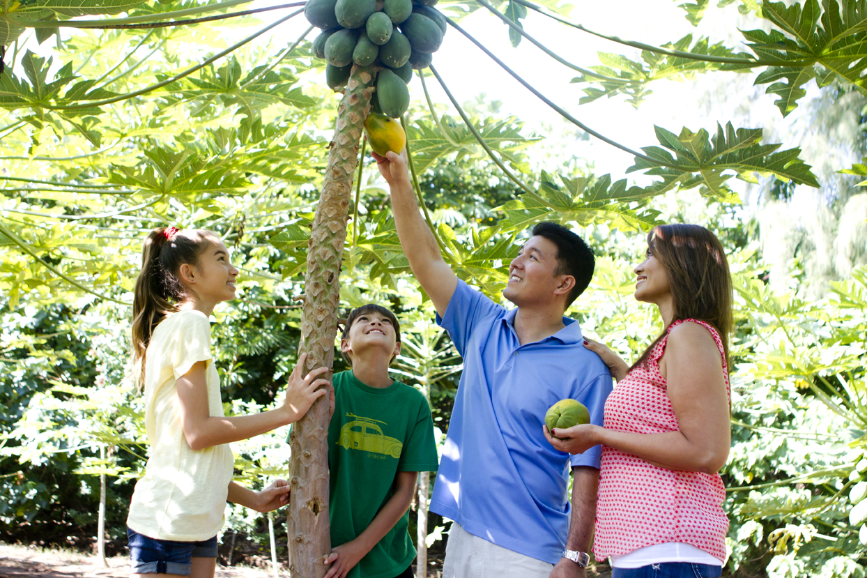 Family-Papaya-Tree-2